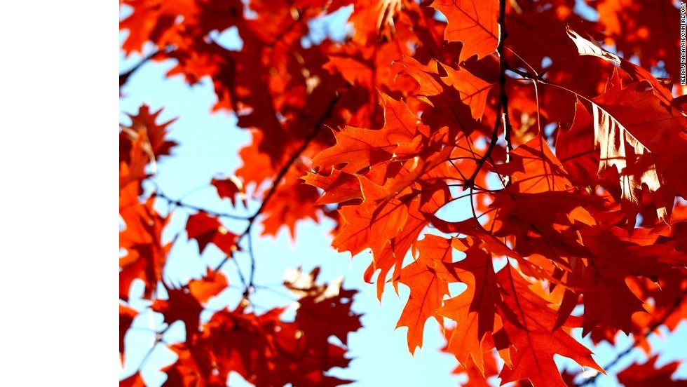 Happy first day of fall! Autumn leaves glow at Nike's headquarters in Beaverton, Oregon. <!-- --> </br><!-- --> </br><strong><a href='http://cnn.com/2014/09/19/travel/irpt-fall-leaves-2014/index.html'>See more gorgeous fall photos from around the U.S.</a></strong>