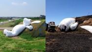 Se incendia el conejo gigante de Taiwán