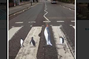 Cruce de pingüinos