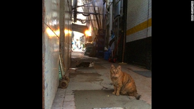 "HONG KONG: ""Alley cats looking for breakfast. People put food out for them so they won't have to look too far."" - CNN's Brad Olson. Follow Brad (@cnnbrad) and other CNNers along on Instagram at instagram.com/cnn."