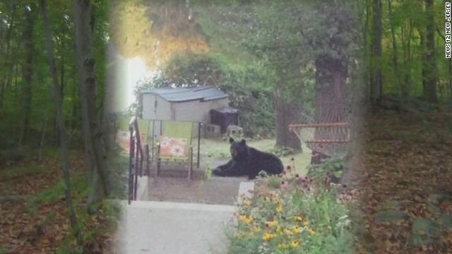 New Jersey Hiker Mauled By Black Bear Cnn Com