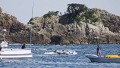 Japan dolphin hunt resumes