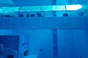 Mundo acuático