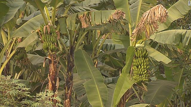 Un país bananero