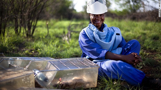 Because rats are small, they are also cheaper to transport and store than dogs -- who are traditionally employed to sniff out mines. In Africa, they are a cheaper option, because they are plentiful and easy to train. Each Apopo rat costs about $7,600 to train (a third the price it costs to train a dog).