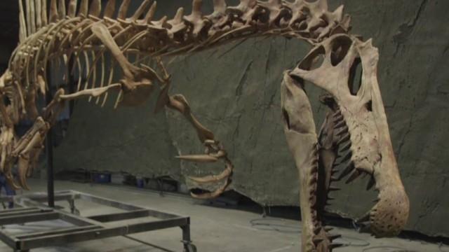 The Dinosaur That Ate Sharks For Breakfast Cnn Com