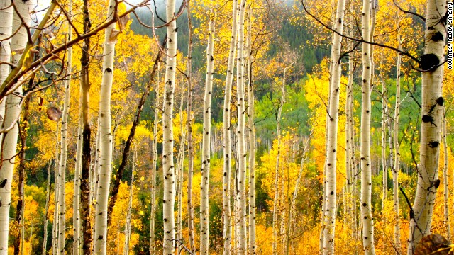 Every autumn, the hills of Aspen, Colorado, turn a beautiful gold. See more photos on <a href='http://ireport.cnn.com/docs/DOC-1175002'>CNN iReport</a>.