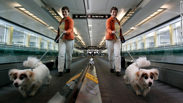 Travelers could learn a thing or two from this dog, who knows that on the moving walkway you walk, not stop.