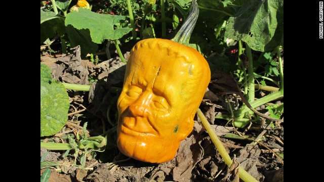 "FILLMORE, CA: Tony Dighera, owner of Cinagro Farms, created what he calls ""Pumpkinstein."" After four years of trial and error, the pumpkins that are grown within molds of Frankenstein faces are on sale online and at stores for Halloween. Photo by CNN's Michael Cary."