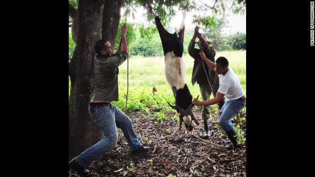 "CUBA: ""Farmers in the small Cuban town of Paso Quemado prepare a goat to be slaughtered. Guajiros --Cubans who live in the countryside-- are used to growing and killing their own food. It was over for the goat very quickly."" - CNN's Patrick Oppmann. Follow Patrick (<a href='http://instagram.com/cubareporter' target='_blank'>@cubareporter</a>) and other CNNers along on Instagram at <a href='http://instagram.com/cnn' target='_blank'>instagram.com/cnn</a>."