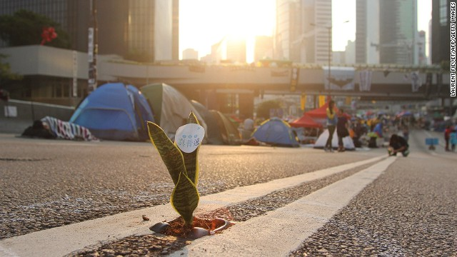 OCTOBER 15 - HONG KONG: A Mother-in-Law's Tongue plant is placed on a road as pro-democracy demonstrators sleep in tents on a major east-west thoroughfare which usually carries buses, cars and trams on October 14. <a href='http://cnn.com/2014/10/15/world/asia/hong-kong-police-protest-video/index.html'>Since late September,</a> protesters have been demanding a greater say in who leads Hong Kong, a Special Administrative Region of China.