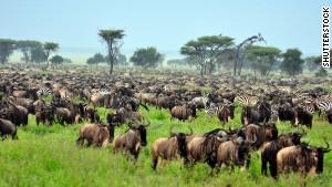 Great Migration -- Serengeti