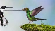 Las fotos más asombrosas de la vida salvaje en 2014