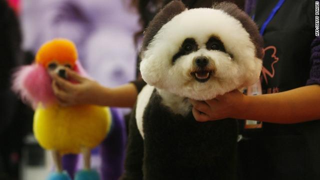 Cuidado de mascotas, todo un negocio en China