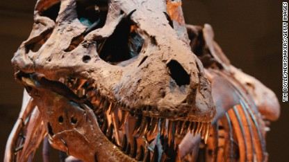 The most complete T-Rex ever found