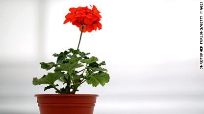 Can a houseplant spark creativity?