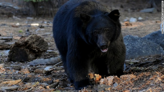 Bear attacks are rare, but black bears are fast. Really fast.