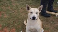 Perro lleva hasta a su dueño a policía antidroga