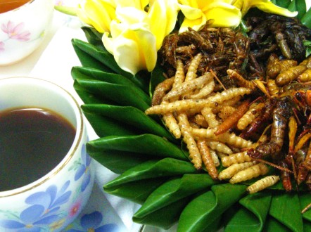 How to convince the world to get over the 'yuck factor' and eat insects