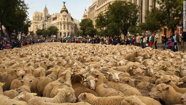 NOVEMBER 3 - MADRID, SPAIN: Shepherds guide a flock of 2,000 sheep through the center of Madrid on November 2, in defense of ancient grazing, droving and migration rights which are increasingly threatened by urban sprawl and modern agricultural practices. Traffic was held back while the bleating parade made its way past the city's renowned landmarks.