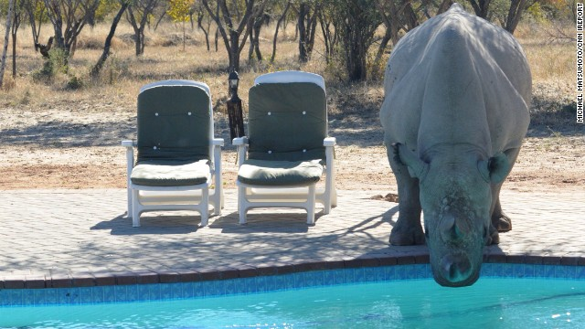 A rhino takes a drink from a pool at Khama Rhino Sanctuary in Serowe, Botswana. The sanctuary's wildlife project aims to save rhinoceroses.