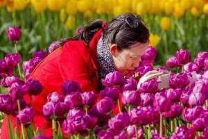 Países Bajos = flores