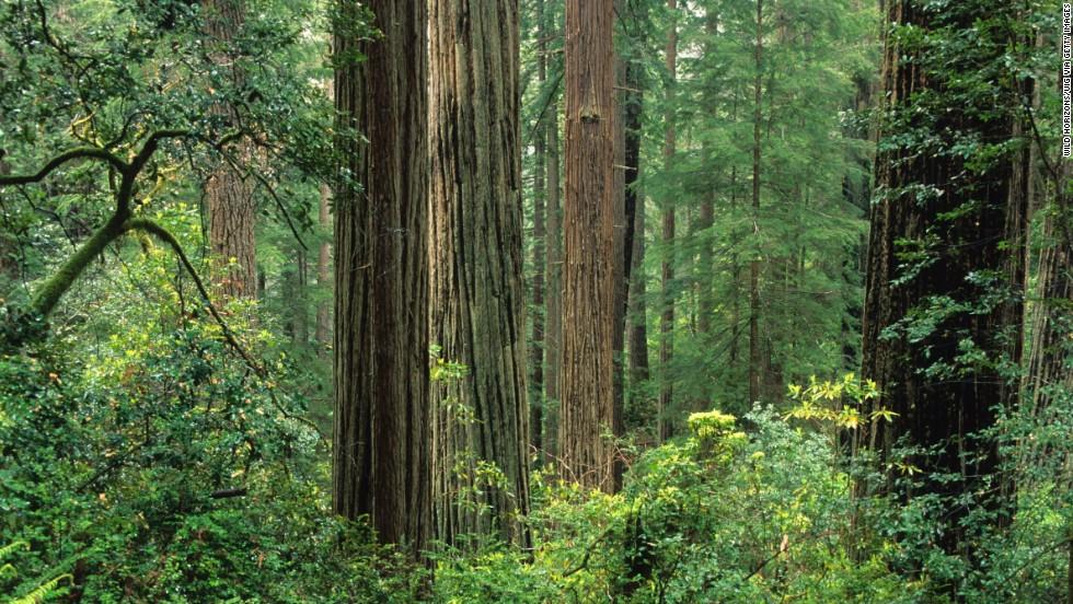 América del Norte = bosques