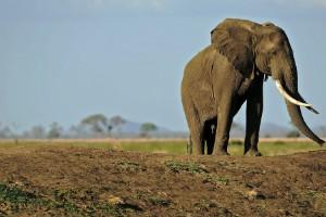 Países donde hay safaris = vida salvaje