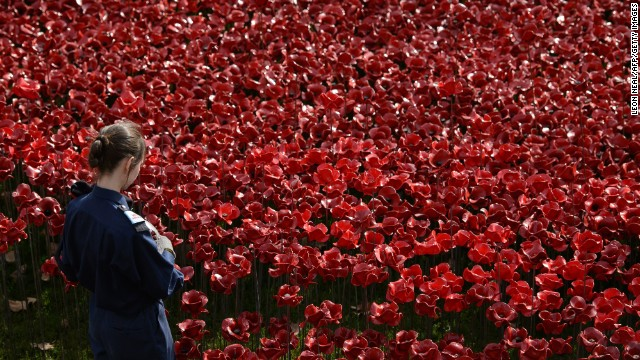 """The following day, more volunteers will arrive to start """"picking"""" the flowers, which will then be checked, cleaned and shipped off to their new owners."""