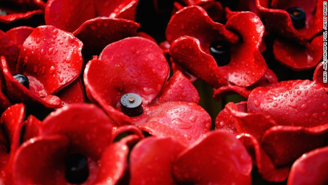 Each of the blooms commemorates one of the British and Colonial soldiers who died in World War I.