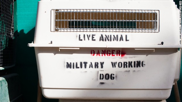 Farthing's organization is one of the only official animal shelters in Afghanistan.