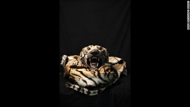 """A tiger skin is among the illegal items that have been confiscated over the years at Warsaw Chopin Airport in Warsaw, Poland. Photographer Adam Lach recently documented some of the items as part of his project """"Human Tsunami."""""""