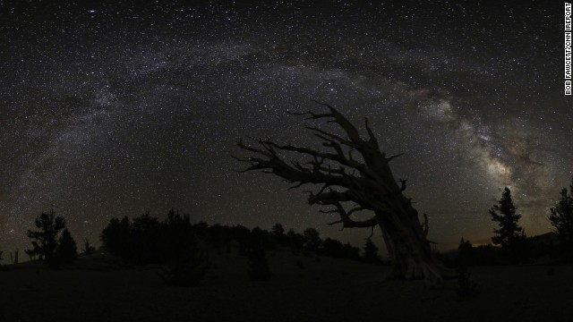The Milky Way twinkles over the Ancient Bristlecone Forest near Big Pine, California. The tree near the center of the photograph is the Great Basin bristlecone pine tree. The oldest known tree of this type is more than 5,000 years old.