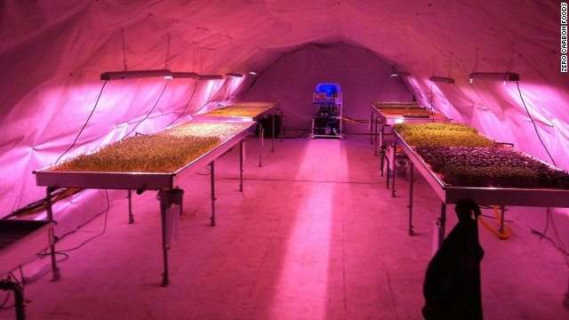 Abandoned stations are already hosting some entrepreneurial activity. This underground farm from Zero Carbon Food is operating at Clapham station.