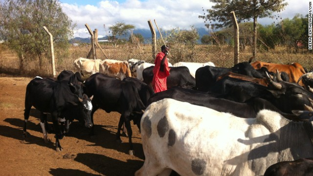 In recent years Maasai movements have decreased to only one male in a family moving with their cattle, enabling the rest of the family to become more accessible to health teams and services.