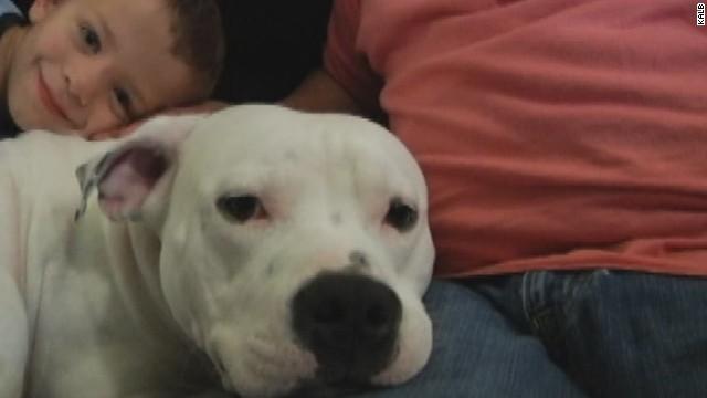 """Una familia lucha para salvar a su pitbull de una ley contra """"perros violentos"""""""