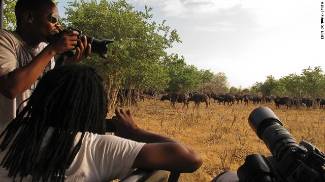 """A herd of several hundred Cape buffaloes, one of Africa's """"Big 5"""" animals, are spotted at Botswana's Chobe National Park."""