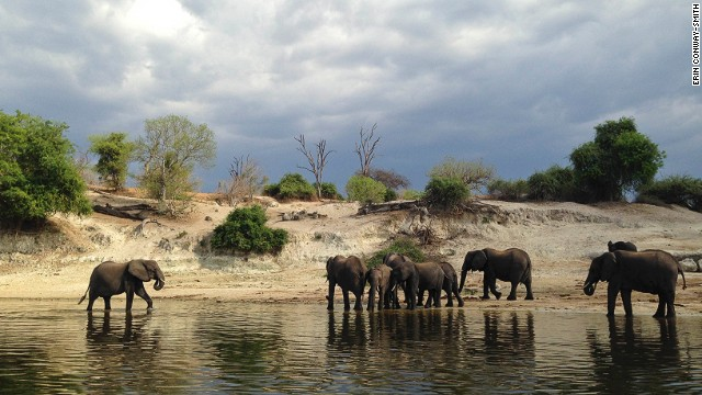 Chobe National Park in Botswana is famous for its huge elephant population, numbering some 120,000 in total.