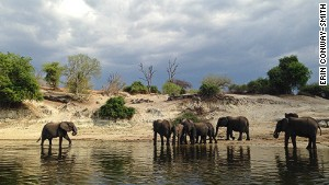 Trunk call: Chobe National Park is famous for its large elephant population