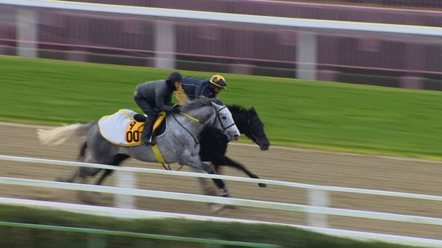 Japan's rise to racing prominence