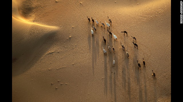 <strong>October 21:</strong> An aerial view from a hot-air balloon shows camels walking in Margham, United Arab Emirates.