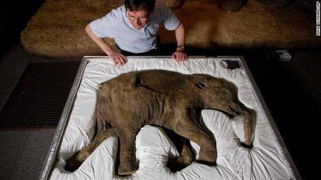 "<strong>May 19:</strong> Researcher Adrian Lister looks at Lyuba, a baby woolly mammoth considered to the most complete example of the species ever found, at the Natural History Museum in London. Lyuba, which means ""love"" in Russian, was found frozen in clay and mud in Siberia in 2007. She is estimated to have died about 42,000 years ago."