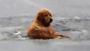 Dog falls through thin ice but …