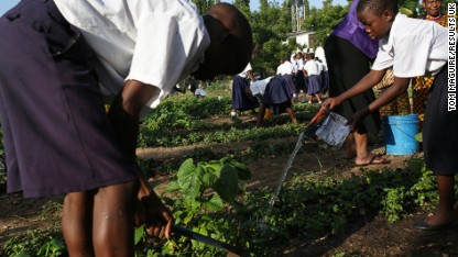 Children and dig and water crops in their school garden