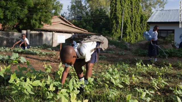 Students of Mbuyoni primary school pick vegetables to be cooked for lunch that day.