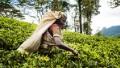 Amazing 3-minute Sri Lanka memoir