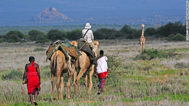 Guided by Masai and Samburu trackers, Karisia Walking Safaris' team of camels carry guests through Kenya's Laikipa country to find giraffes, zebras and more.