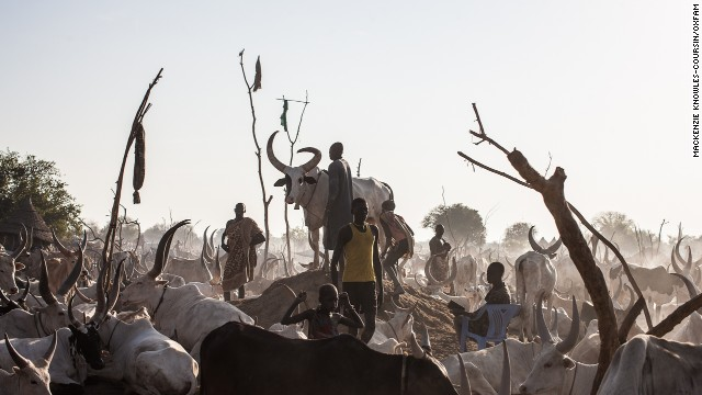 A South Sudanese man tends to his prize bull in a cattle camp near Mingkaman.