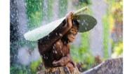 Las 15 mejores fotos de Sony World Photography