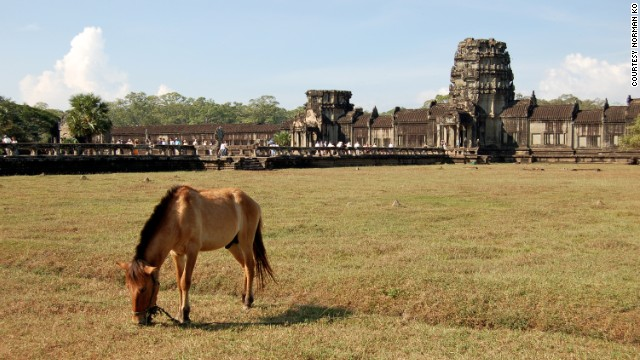 A horse grazes in front of the ancient Khmer landmark of Angkor Wat in Siem Reap, Cambodia.